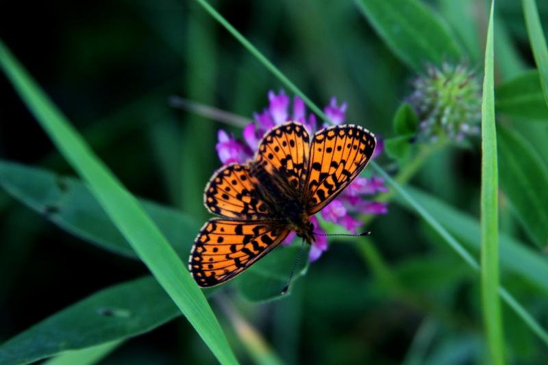 3373654-butterfly.jpg