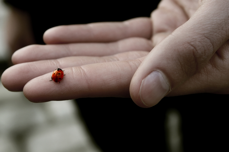 3540992-the-ladybug.jpg
